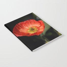 California Poppy flower Notebook