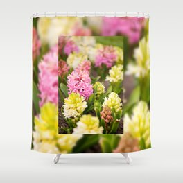Hyacinthus blooming pink and white Shower Curtain
