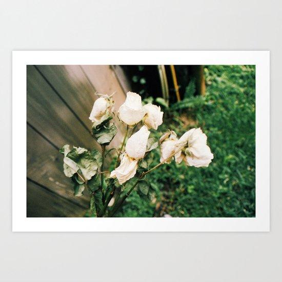 Like Petals Art Print