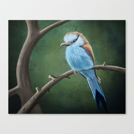 Racket Tailed Roller Canvas Print