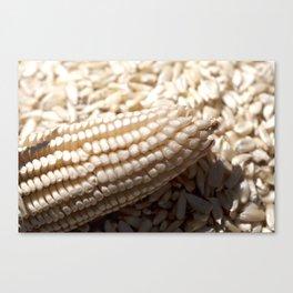 White corn Canvas Print