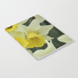 daffodils bloom in spring in the garden Notebook