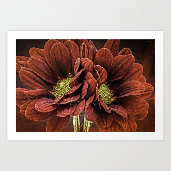 Red Chrysanthemum Duo Art Print