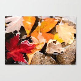 The River in Autumn. Canvas Print