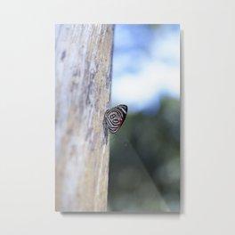 Butterfly 80 Metal Print