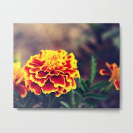 Flower carnation Metal Print