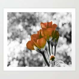 Mustard Orange Flowers Pop of Color Art Print