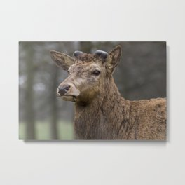 A Moment of Contemplation Metal Print