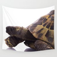 tortoise Wall Tapestries featuring Greek land tortoise by AvHeertum