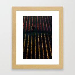 Autumn vineyard at sunset Framed Art Print