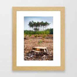 Woods logging one stump after deforestation Framed Art Print