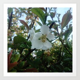 flower and light - White flower 3 Art Print