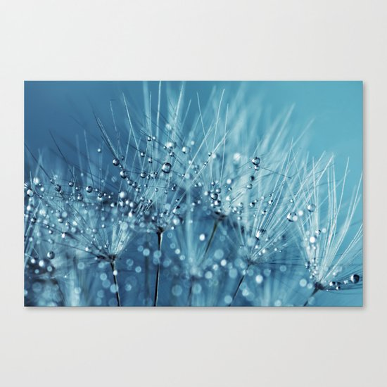 Drops sparkling on a Dandelion- Abstract blue close-up Canvas Print