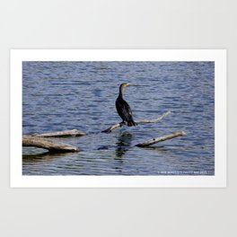 Chicago Coromorant (Chicago North Pond Collection) Art Print