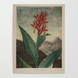 Temple of Flora: Inian Reed Poster