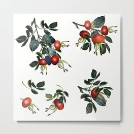 Rose hip, realsitic botanical illustration vector Metal Print