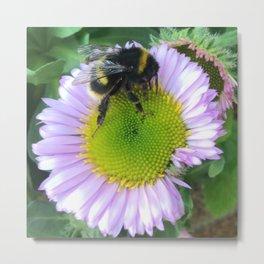 Bee on a daisy Metal Print