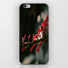 Red Bells iPhone & iPod Skin