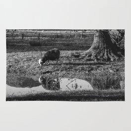 Herdwick sheep grazing in a flooded field. Gasmere, Lake District, UK. Rug