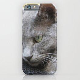 Gorgeous Grey Cat Photo Portrait iPhone Case