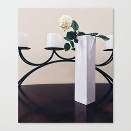 Bloomed rose Canvas Print