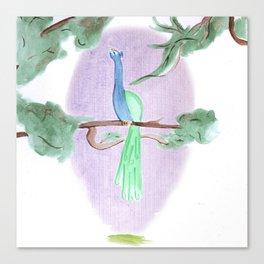 Peacock Prime Canvas Print