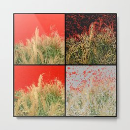 Wheatgrass against red wall Metal Print