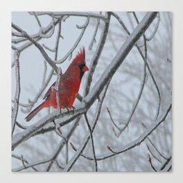 Redbird on Icy Tree Branch Canvas Print