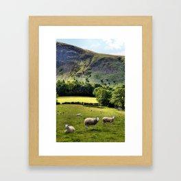 Lucky Sheep Framed Art Print