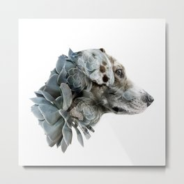 Mr. Murray The Succulent  Metal Print