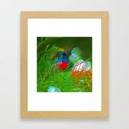 Hummingbird with iridescent colours Framed Art Print