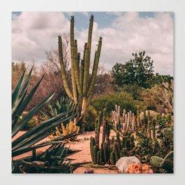 Cactus_0012 Canvas Print