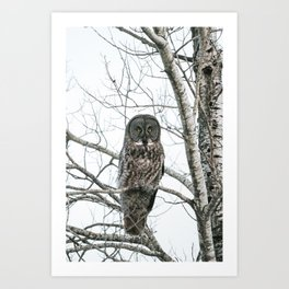 Great Gray Owl Stare Down Art Print
