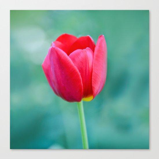 Pink Tulip, Spring Garden Flower Canvas Print