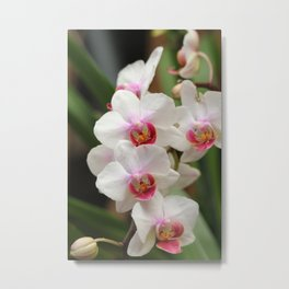 Orchid_2015_0601 Metal Print