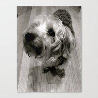 jake Canvas Prints featuring Jake by Julia Blanchette