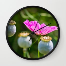 Pink Poppy and Buds Wall Clock