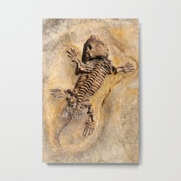 Seymouria baylorensis - cast of fossil Early Permian period Metal Print