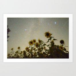 Sunflower Cosmos Art Print