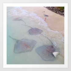 Maldives bird waves sting rays Art Print