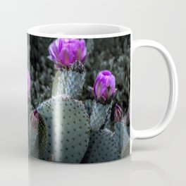 Cactus Blooming in the Anza-Borrego Desert State Park, Southern California Coffee Mug