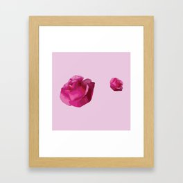 Pink Rose Flowers Framed Art Print