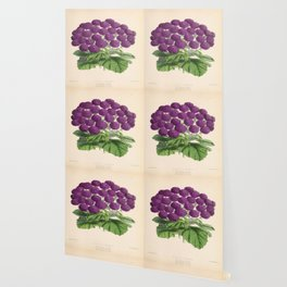 Double Cineraria Original hand-coloured print drawn and lithographed by Fitch Wallpaper