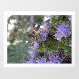 Bees on Buddleia Art Print
