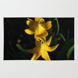 Glacier National Park, Glacier Lilies, Botanical Photography, Floral Print, Yellow Flowers Rug
