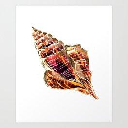 Bronze Conch Shell Art Print