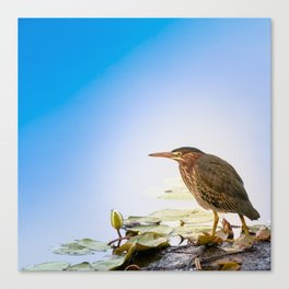 Crowned Night-Heron- Hammond pond Canvas Print