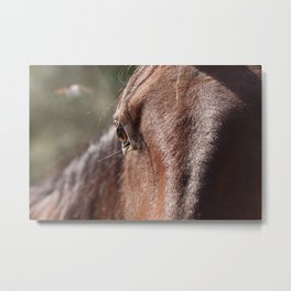 Horse's Gaze Metal Print