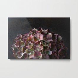 Hydrangea flower head  Metal Print