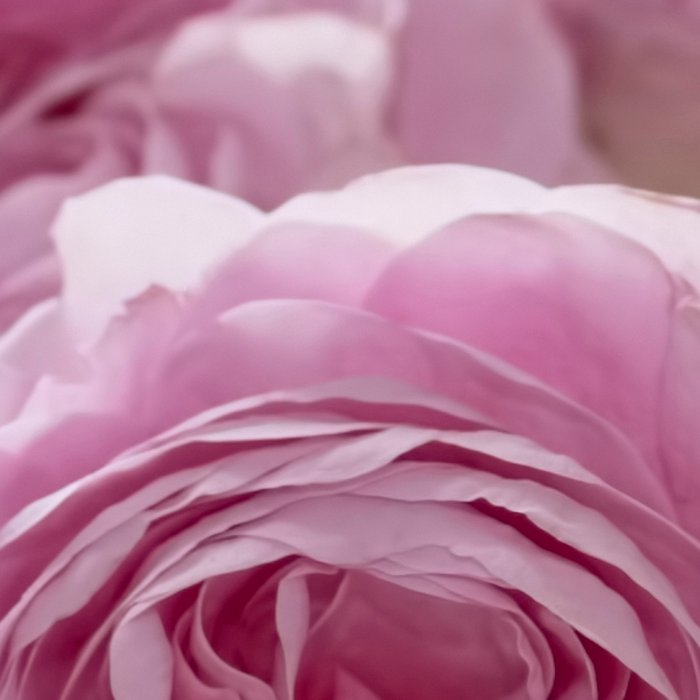 Wonderful English Roses in a crystal bowl- Rose-Flowers Leggings